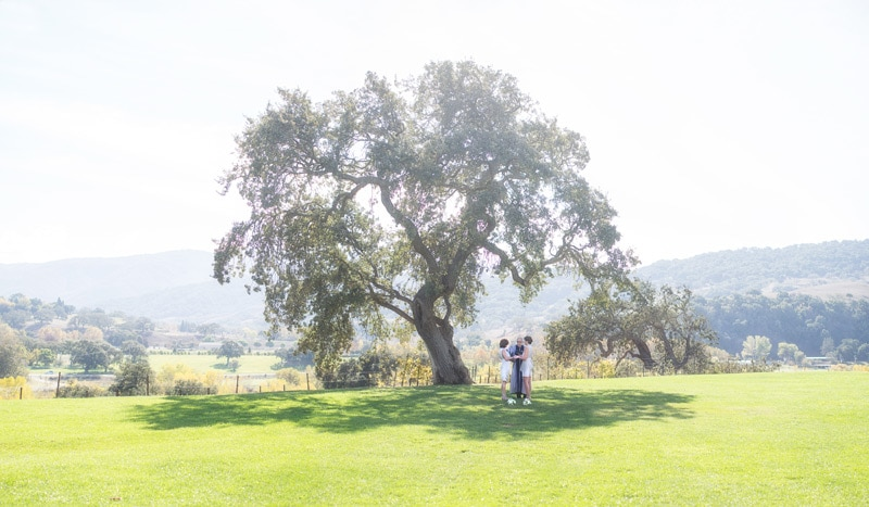Ceremony under the huge oak during a Sunstone Villa Elopement in Santa Ynez.
