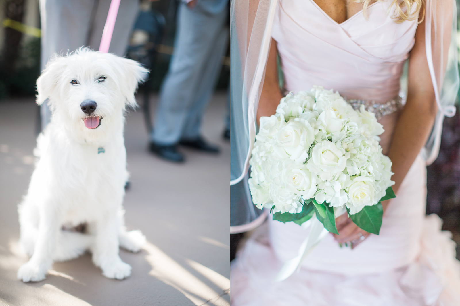 Bridal bouquet and her puppy at Hotel Milo