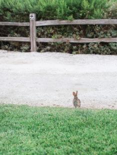 Elegant Bacara Bluffs Elopement | Bunny